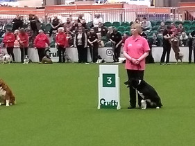 Competing in Rally At Crufts.jpg