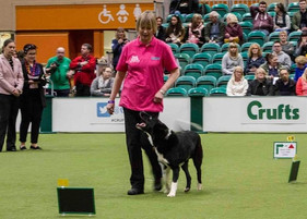 Competing in Rally at Crufts 3.jpg