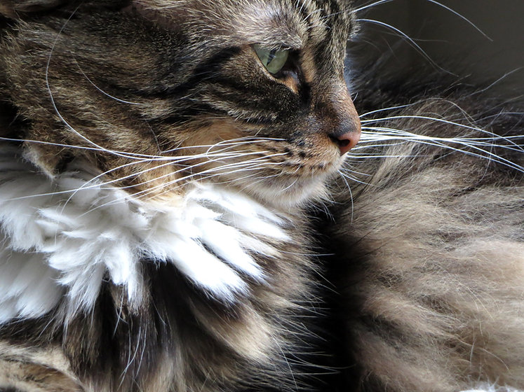 Pet Sitting The Cat Sitter Seattle