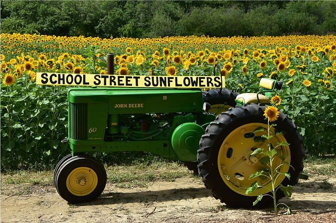 schoolStSunflowers5.jpg