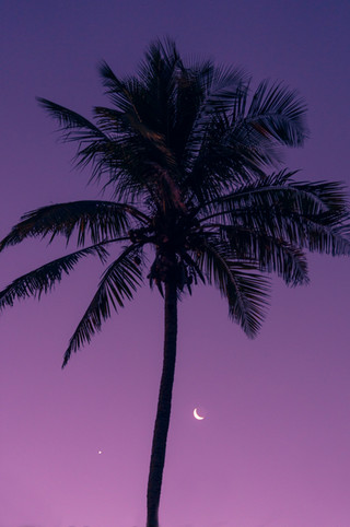 Purple night.
