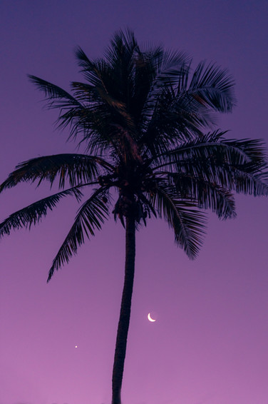 Purple night.