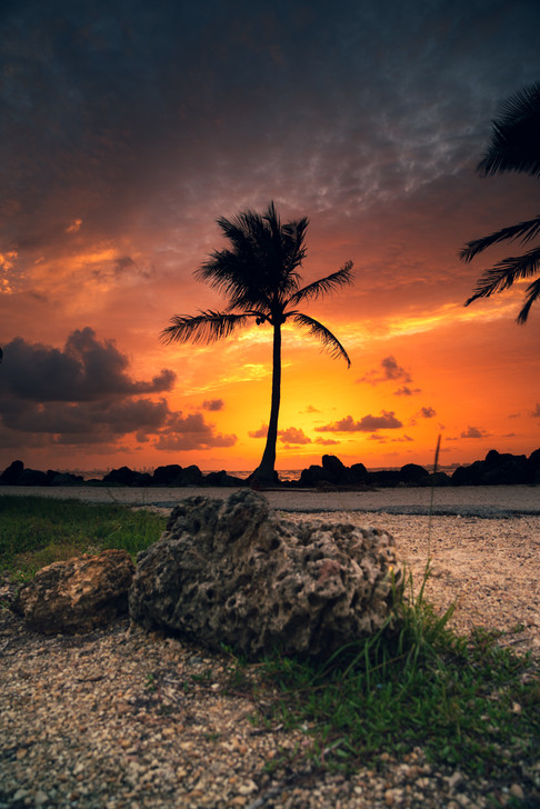 Hug a palmtree.