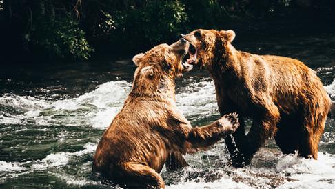 Fight.