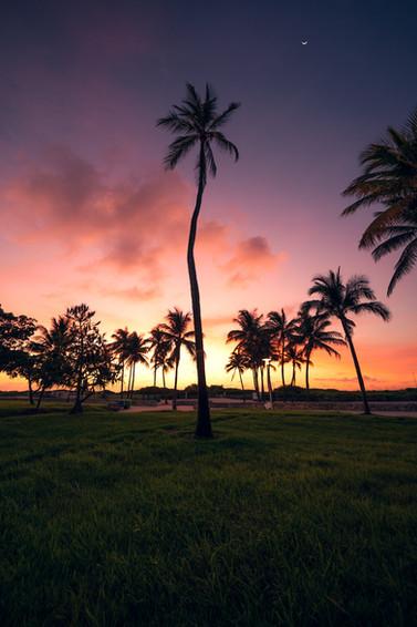 Palmtrees everywhere.