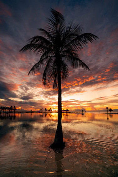 Follow the palmtree.