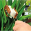 Thumbnail: Leaf Cleaning Brush