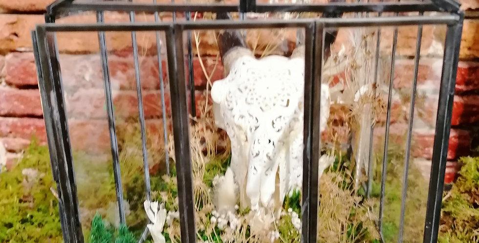 Terrarium stabilisé crâne chèvre