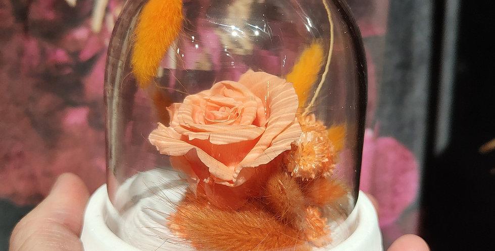 Mini rose éternelle pêche