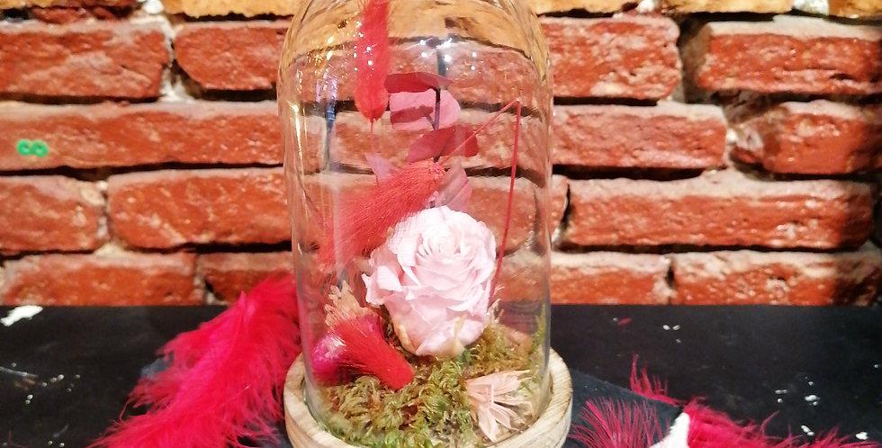 La rose éternelle rose