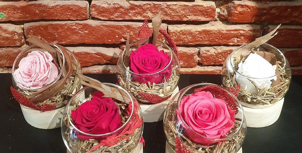 Globe rose éternelle