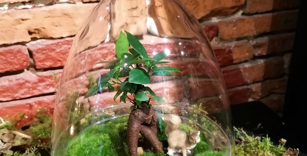 Le terrarium écureuil 🐿️