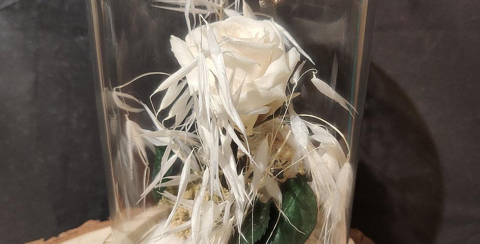 L'éternelle rose blanche