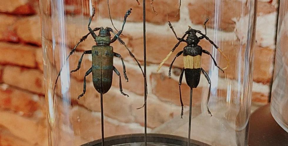 Insectes sous cloche