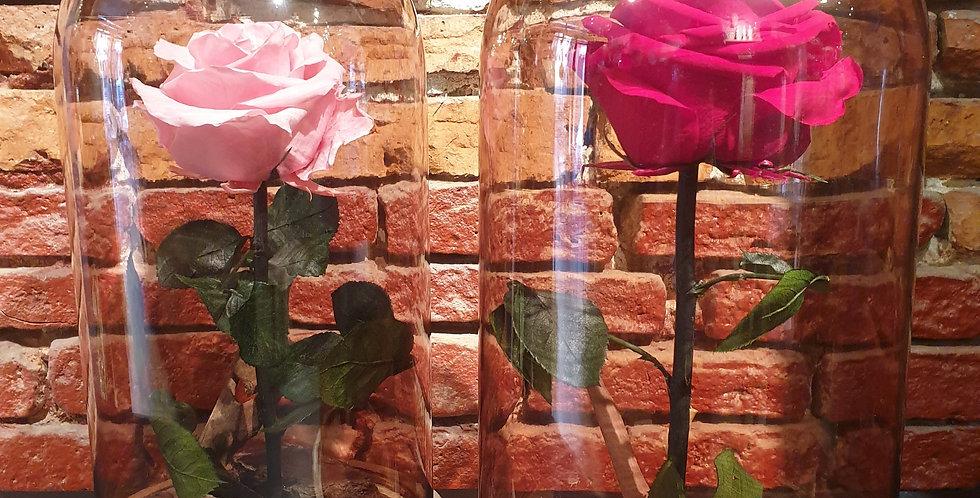 Cloche Rose éternelle Gros bouton