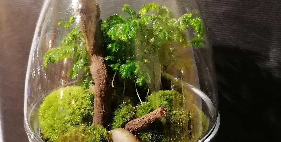"""Petit terrarium œuf """"s"""""""