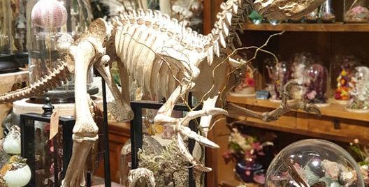 Vélociraptor Géant