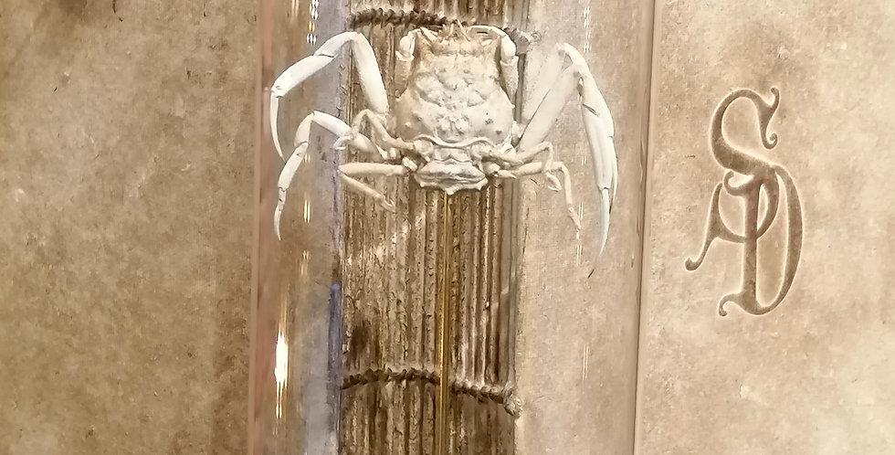 Crabe beige des mers
