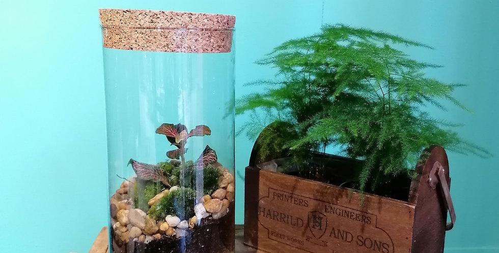 Terrarium tube (26cm de haut)