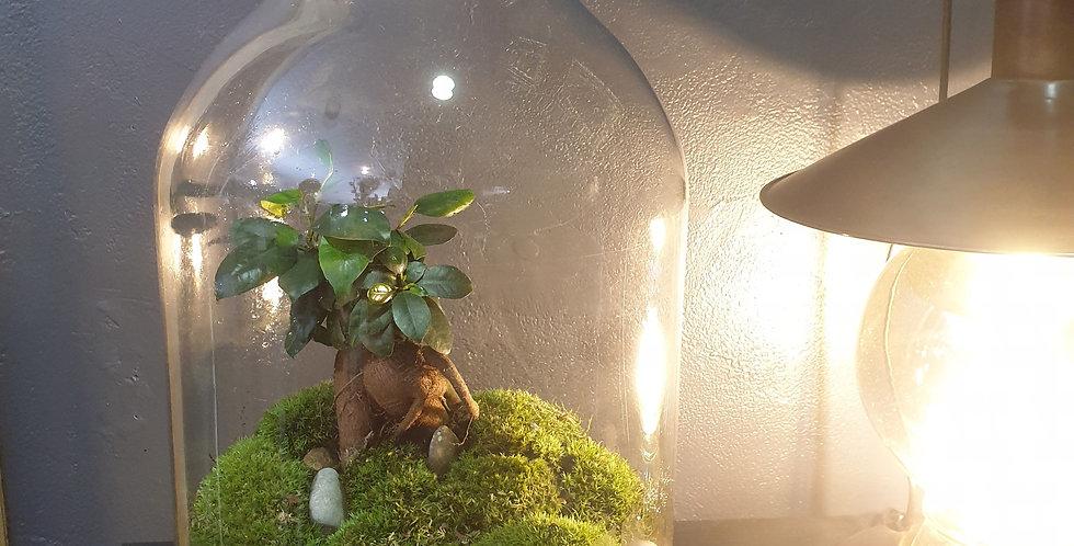 Terrarium boule bois XL