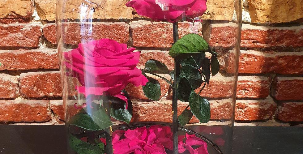 Cloche Duo de roses éternelles