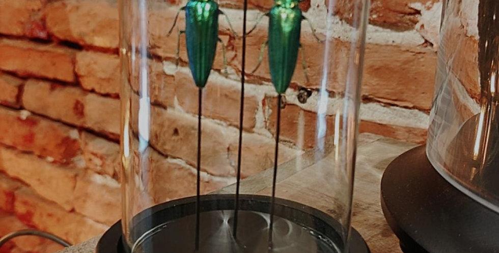 Insectes sous cloche .