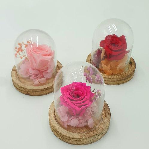 Mini cloche rose eternelle