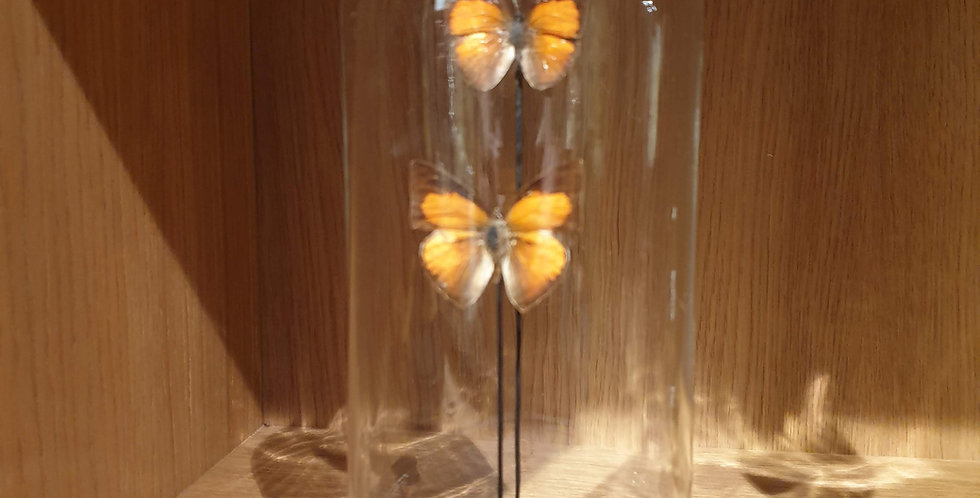 Petit globe papillons oranges