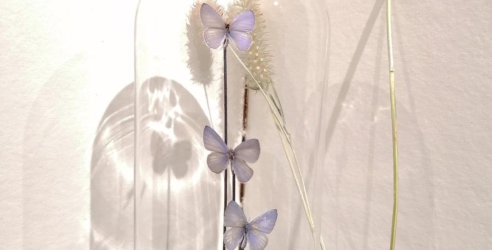Petite cloche papillon (s)