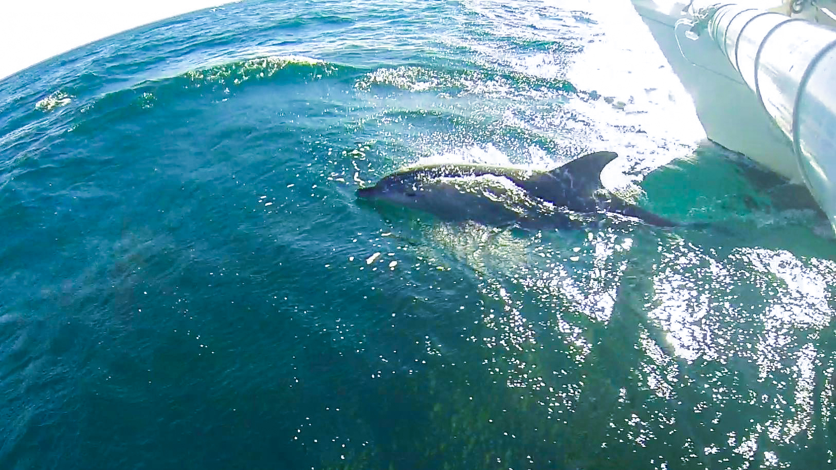 Moana_Sailing_Fiji_Dolphin