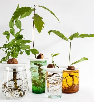 botanopia-coffret-sprout-support-noyau-p