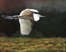 Sunlit Egret.jpg