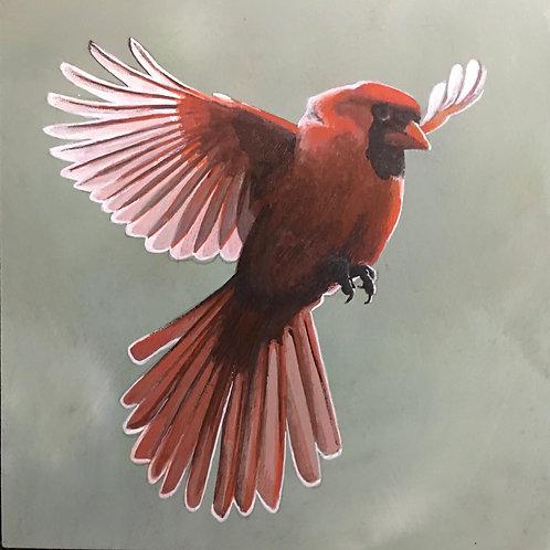 Flaring Cardinal