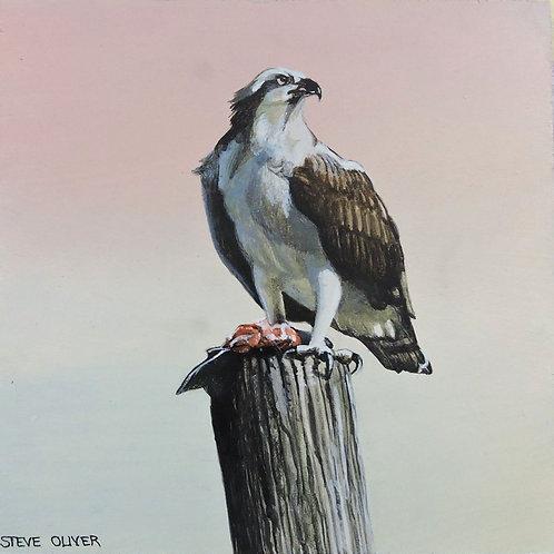Osprey on Pole