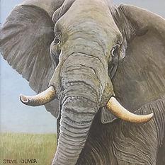 2019 Mini - Bull Elephant.jpg