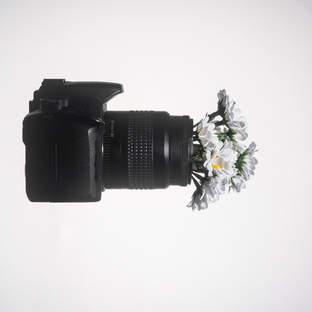 Fotografia Floral