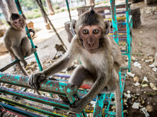 Hell, Monkeys, & a Stolen Earring