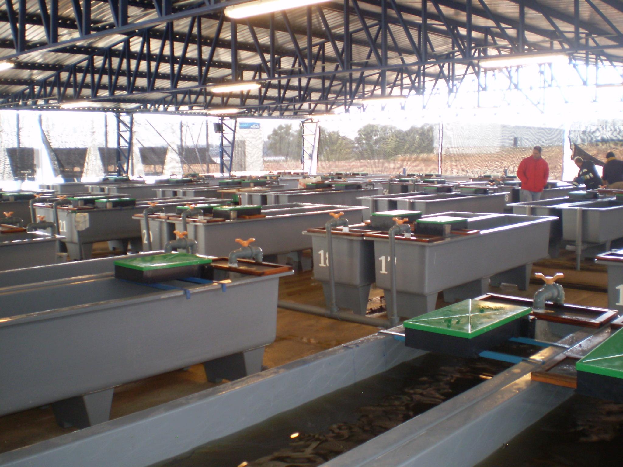 2010. Planta de esturiones (2)