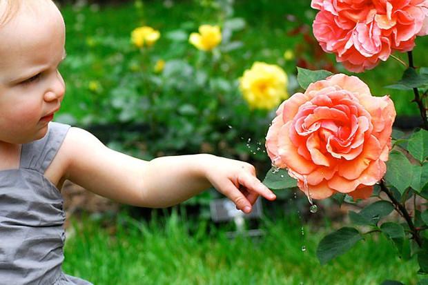rose flick.jpg