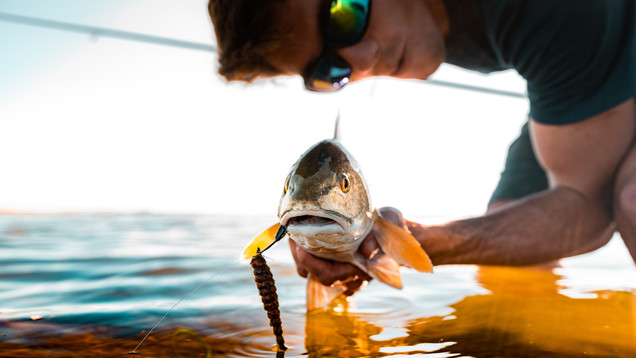 Laguna Madre Redfish