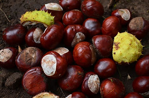 chestnut-454572_640.jpg