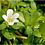 Thumbnail: Brahmi plante 125 gélules vegan