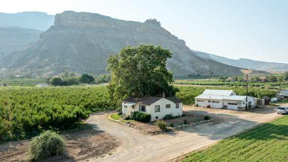 Palisade Peach Orchard - FOR SALE - PRICE REDUCED