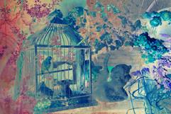 The bird #3