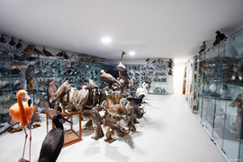 Showroom Taxidermie