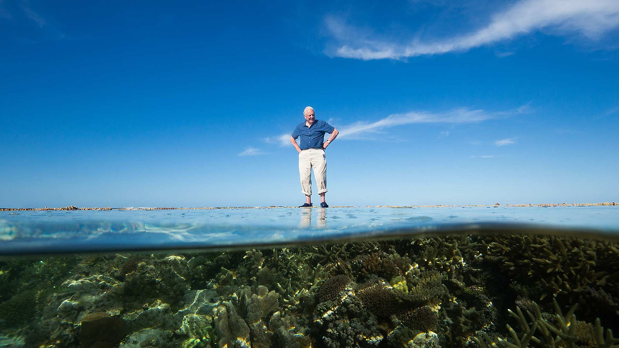 Great Barrier Reef with David Attenborough - Documentary