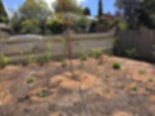 Garden Oct 2016.jpg