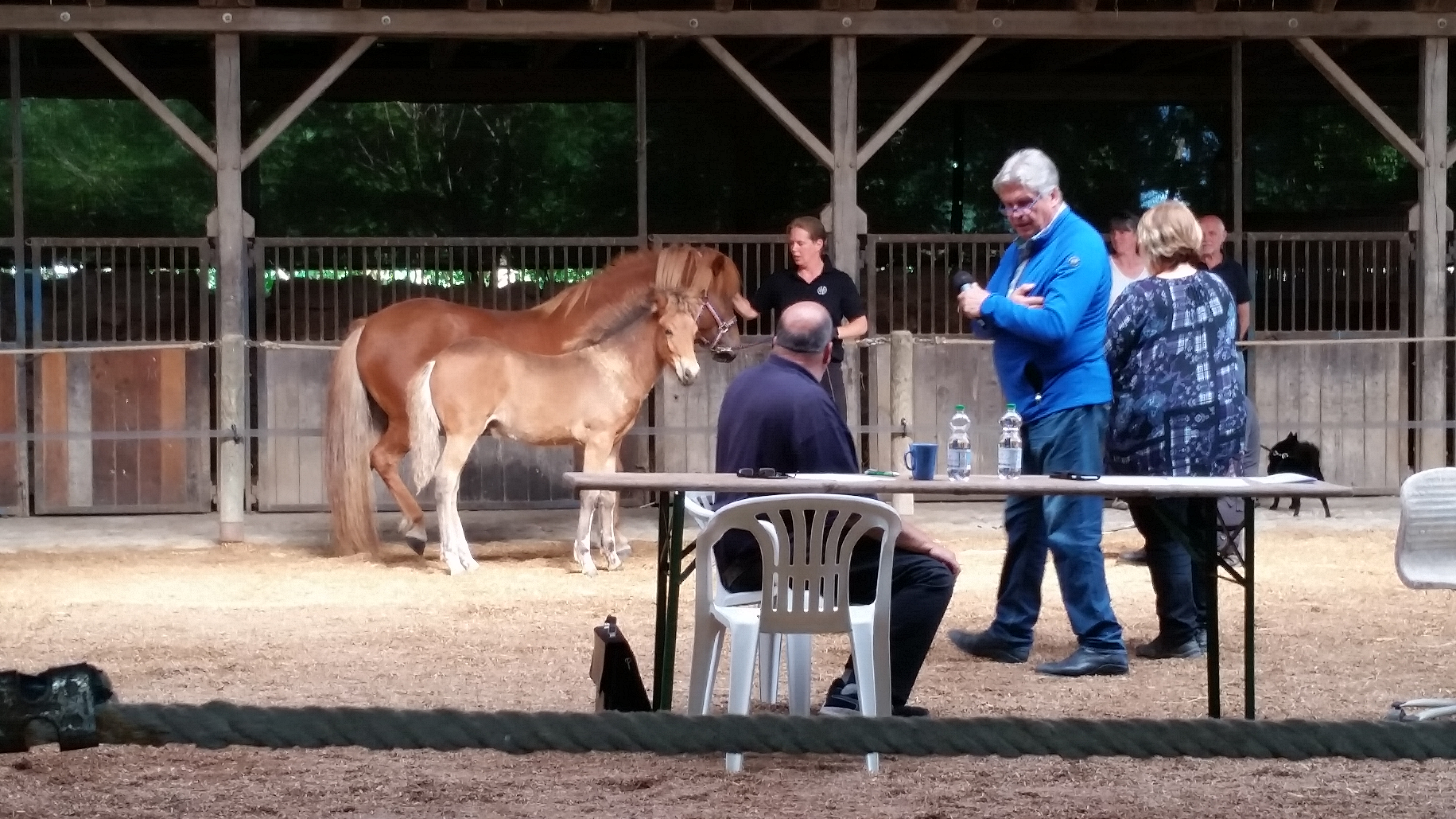 foal evaluation
