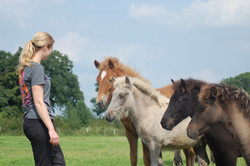 Lindenhof foals