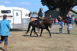 Rural Lifestyle Expo Ballarat 2016, with Marlanoc and Litli Stadur